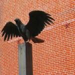 cuervo apunto de volar